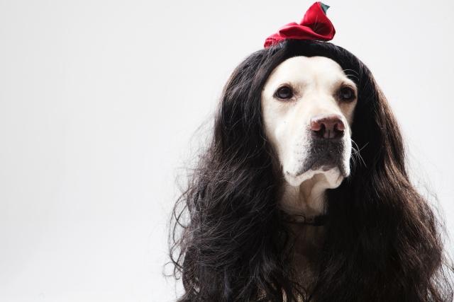 人面犬って何妖怪ウォッチにも出てきた気になる人面犬のまとめ